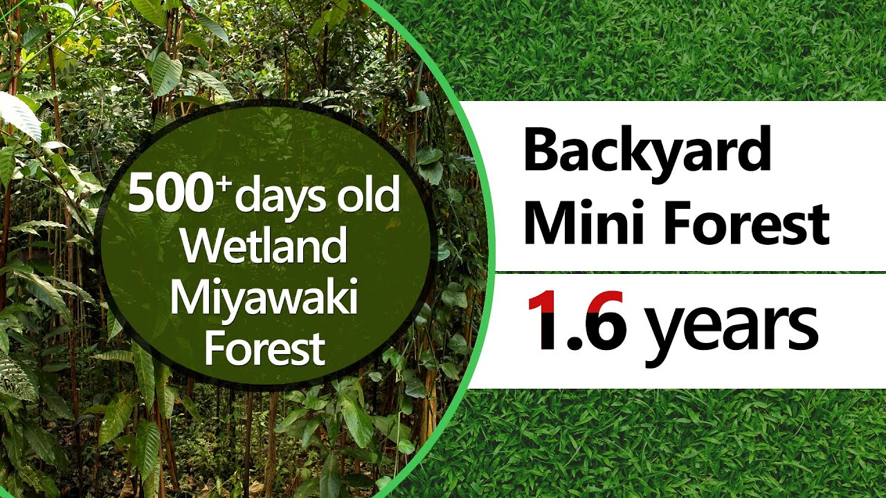 500 + days old Miyawaki forest in a Wetland | Backyard Mini Forest, Peyad | Crowd Foresting