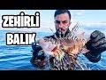 Kameraya Yakalanan 5 Deniz Kızı - YouTube