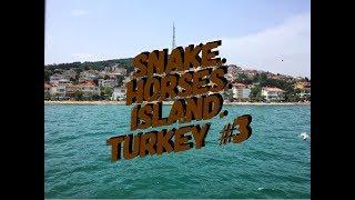 Турция Чуть не раздавил змею ч3
