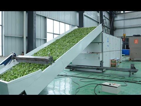 Guoxin CBD Hemp Drying Machine | Discount Pharms