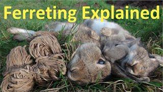 Ferreting Rabbits Explained