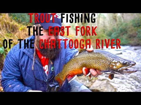 Trout Fishing South Carolina's East Fork Chattooga River