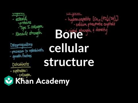 Cellular structure of bone | Muscular-skeletal system physiology | NCLEX-RN | Khan Academy