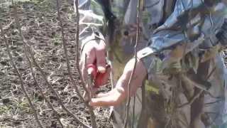 обрезка деревьев(обрезка деревьев по разряжено ярусной системе., 2015-05-16T23:13:31.000Z)