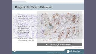 Gambar cover Immunohistochemistry IHC Tips and Techniques