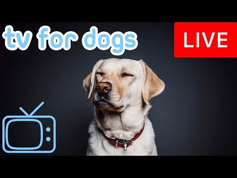 Dog Music TV - Relaxing 8 Million Dogs Every Month
