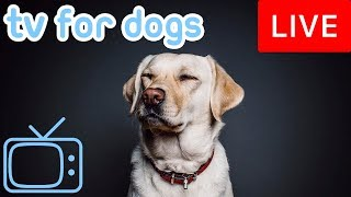 Dog TV - Relax Your Dog Music - Helping 8 Million Dogs Every Month