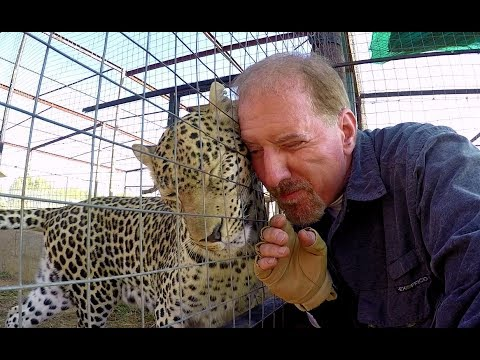 Do Leopards Purr? | Cute Affectionate Big Cat Purrs & Rumbles Like A Kitten At Breeding Center