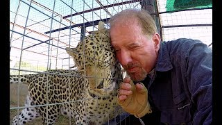 Do Leopards Purr? | Cute Affectionate Big Cat Purrs & Rumbles Like Kitten At Cheetah Breeding Center