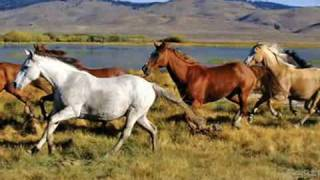 Wild Horses  (Rolling Stones)