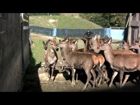 Deer Farming New Zealand