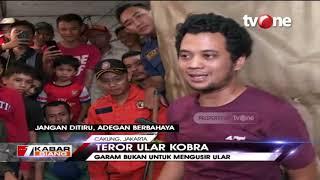 Panji 'Petualang' Turun Tangan Atasi Ancaman Ular Kobra | Kabar Siang di Lokasi (12/12/2019)