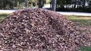 Даже Собаки любят нырять в листья