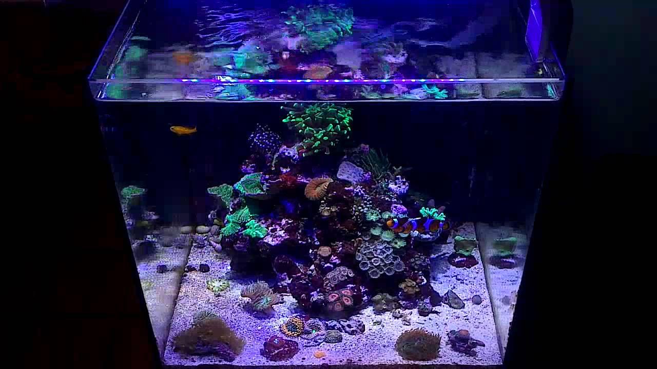 Aqua medic blenny youtube for Aquarium recifal nano