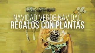 NAVIDAD VERDE NAVIDAD, REGALOS A BASE DE PLANTAS