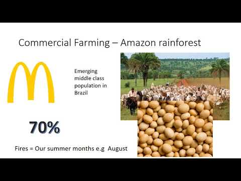 Deforestation of the Amazon