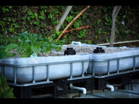 Aquaponic BackYard System - How to build Part 1