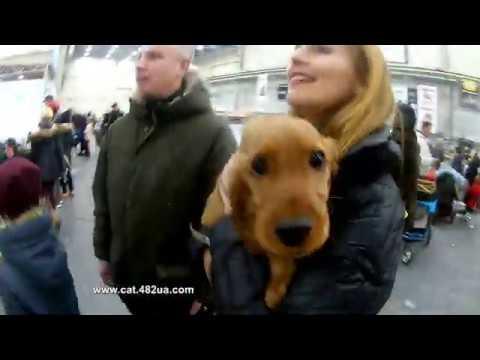 4, FCI CACIB, Київська Русь 2019, Киев, выставка собак