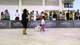 Dog Training Video Singapore - Valerie in Novice Class