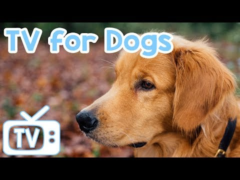 Videos for Dogs! Let Your Dog Watch TV with Squirrels and Birds Plus Music to Calm and Relax them!