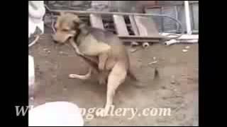 funny videos dog firing bullets