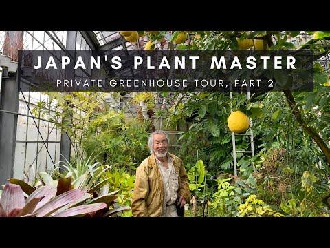 kunzo,-japan's-plant-master;-part-2-|-private-greenhouse-nursery-tour-|-ep-76