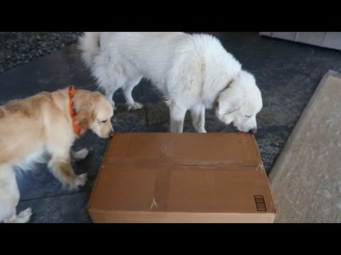 Koda Gets a Big Delivery! (Super Cooper Sunday #96)