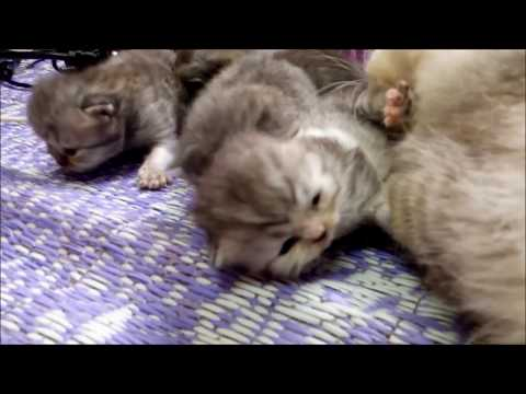 KITTENS TIME LAPSE : 30 days in 3 minutes