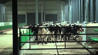 Les vaches de Ramery sont arrivées