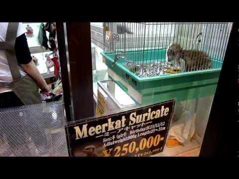 Animal cruelty in Tokyo