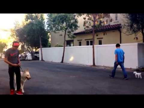 Augusto deoliveira-reactive dog training in CA