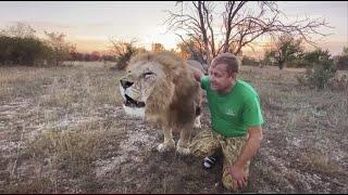 Вот такую перекличку устроили лев Гек и Человек-Лев !