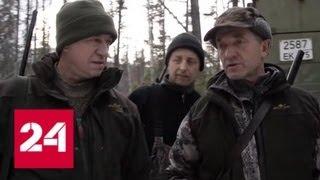 Убийство спящего медведя: автор скандального видео рассказал об угрозах - Россия 24