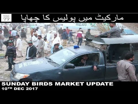 Market mai Police ka Chaapa | Sunday Bird Market Lalukhet Karachi | Video in URDU/HINDI