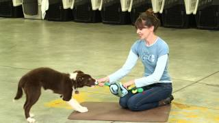 Mental Enrichment With Toys And Games | Teacher's Pet With Victoria Stilwell