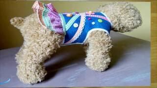 Best Dog Clothes for Fall 2018 I Dog Clothing I Dog Clothes