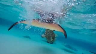 Splash Orange Tailed Mermaid Melissa swimming with stingrays and tropical fish underwater!