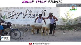 | SHEEP THEIF PRANK | By Nadir AlI & Sanata In  |P4 Pakao | 2017