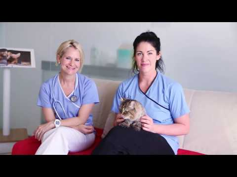 The First Cat Friendly Clinic In The Middle East