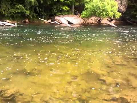 SoHo Rainbows on Dry Flies- 6-9-2011-Jeff Wilkins Flyfishing