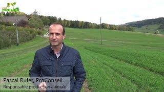 Le pâturage : une source de fourrage de qualité bien valorisé par les ruminants (Pascal Rufer)