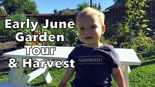 Early June Garden Tour & Harvest after all the Rain