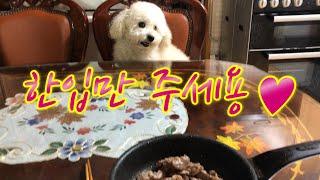 남의 떡이 더 커 보이는 강아지-마로와규니-