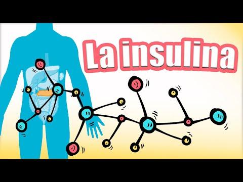 🔴🔴-la-insulina:-síntesis-y-secreción.-el-receptor-de-insulina.-funciones-de-la-insulina- -fisiología