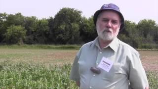 Growing Quinoa in Western Canada