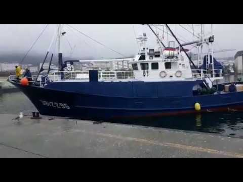 Arranca la costera del bonito: los primeros barcos descargan en Burela