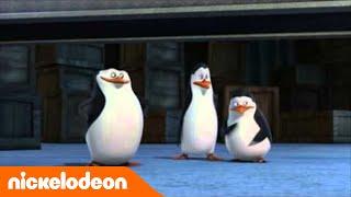 Les Pingouins de Madagascar | Les bonbons | NICKELODEON