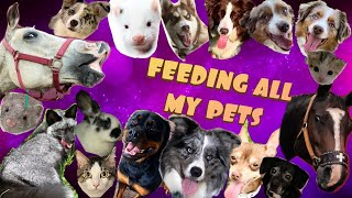 FEEDING ALL MY PETS / EXOTICS TOO!