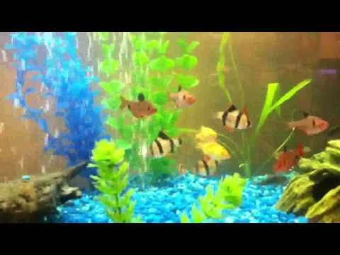 Green Spotted Puffer And Other Tropical Fish