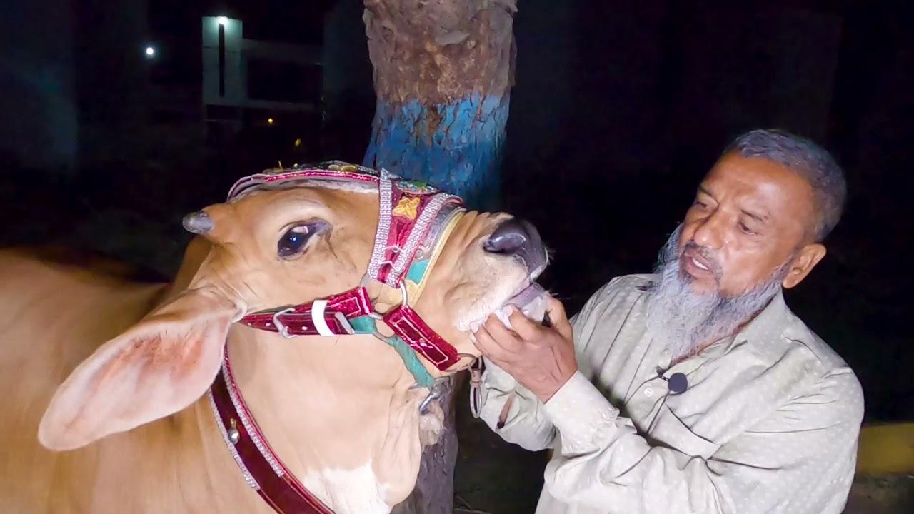 Zain or Zeeshan Bhai Ka Shouq e Qurbani for Bakra Eid 2021 | Cattle Market Karachi | Eid ul Adha